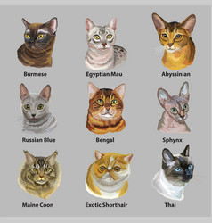 Set of portraits of cats breeds vector