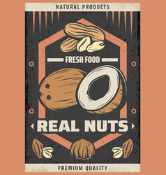Vintage colored natural fresh nuts poster vector