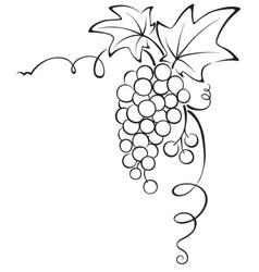 Graphic design - Grapevine vector image vector image