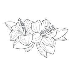Hibiscus Flower Monochrome Drawing For Coloring vector image vector image