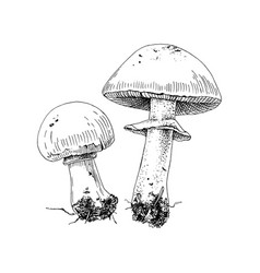 hand drawn champignons vector image