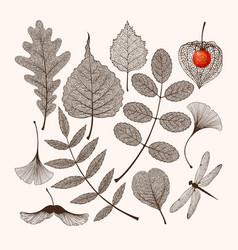set high detailed skeleton leaves vector image