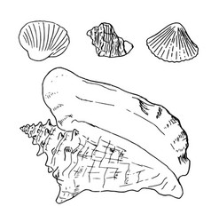 set of various beautiful mollusk sea shells vector image