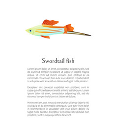 colorful swordtail fish isolated on white graphic vector image