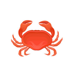 detailed of red crab marine creature vector image