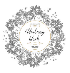 hand drawn background with elderberry black vector image