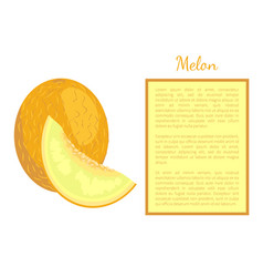 melon exotic juicy stone fruit poster frame vector image