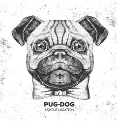 retro hipster animal pug-dog hand drawing muzzle vector image
