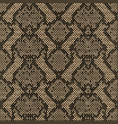 snake skin colorful animal beige seamless pattern vector image