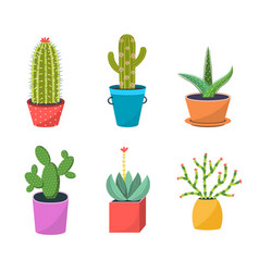 cacti in pots flat set vector image