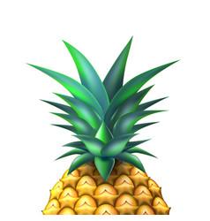 pineapple realistic summer exotic fruit closeup vector image