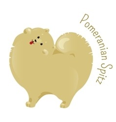 Pomeranian spitz isolated on white background vector image vector image