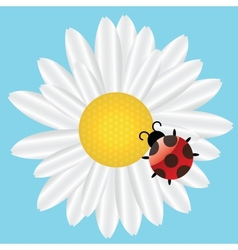 Ladybird on Daisy on blue background vector image