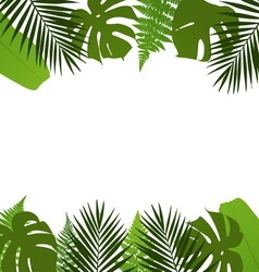 Tropical leaves background with palmfernmonstera vector image