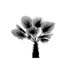 Sketch palm tree hand drawn silhouette palm tree vector