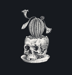 human skull with cactus on a black background vector image