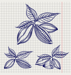 Sketch of cocoa beans set vector