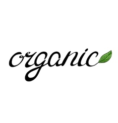 Handwritten word organic with a green leaf vector image