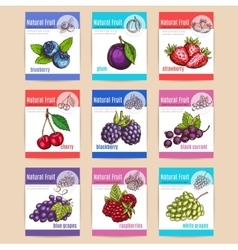 Natural fruits and berries posters vector image vector image