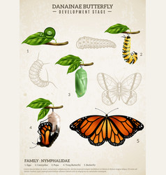 danainae butterfly retro poster vector image