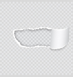 empty realistic torn paper scroll and hole on vector image