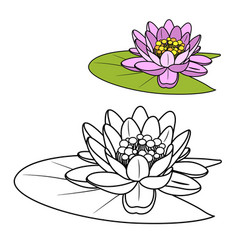 pink lily flower with green leaf color and vector image