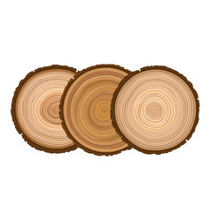 three texture of sawn wood brown object tree vector image