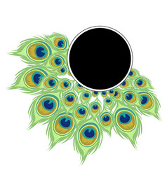 Wreath peacock feathers with black frame for text vector