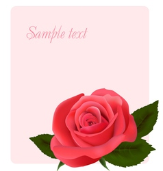 card with beautiful pink rose vector image vector image
