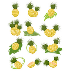 different variants of pineapples vector image