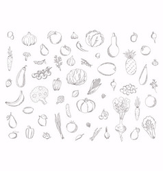 collection hand drawn fruits vector image