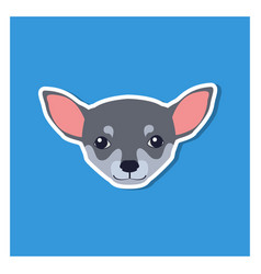 little head of chihuahua dog front view flat icon vector image