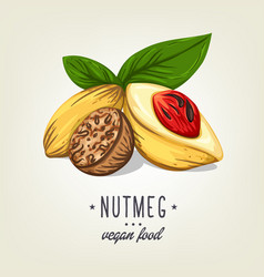 Realistic colour nutmeg with leaves and seeds vector