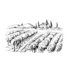 Rows vineyard grape plants and castle vector