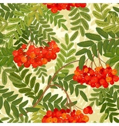 seamless pattern Rowanberries background vector image vector image