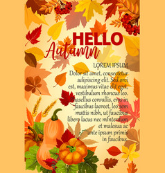 hello autumn banner with orange leaf and pumpkin vector image vector image