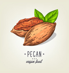 icon of pecan nut isolated on background vector image vector image