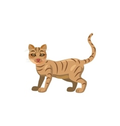 Cat icon in cartoon style vector image