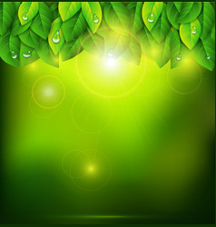 Green background with leaves vector