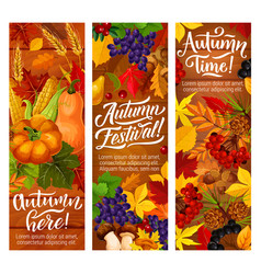 autumn fallen leaves banners for harvest festival vector image