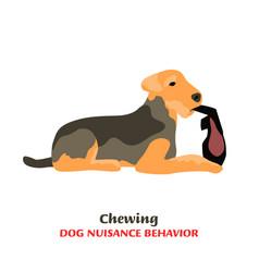 Dog behavior problem icon vector