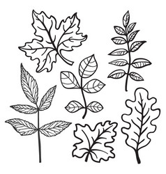 Hand drawn leaves vector
