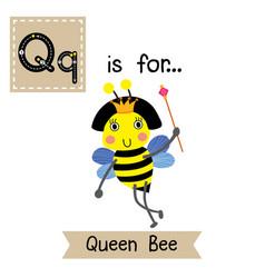 Letter q tracing happy queen bee holding scepter vector