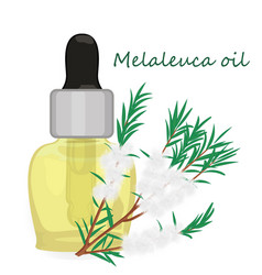 Melaleuca essential oil vector