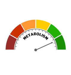 Metabolism level concept vector