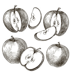 Set apples hand drawn vector