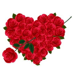 valentine heart of roses vector image