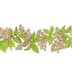 elderberry branch pattern vector image