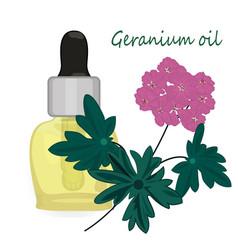 geranium essential oil vector image