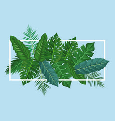 leaves and plants frame vector image